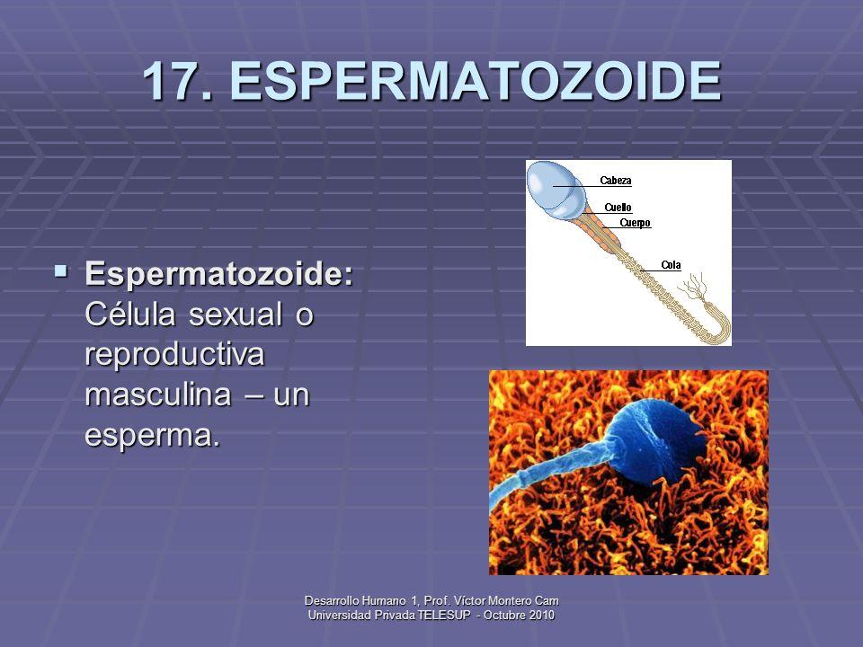 Desarrollo Humano 1, Prof. Víctor Montero Cam Universidad Privada TELESUP - Octubre 2010 16. EPISTEMOLOGÍA GENÉTICA Epistemología genética: Enfoque bá