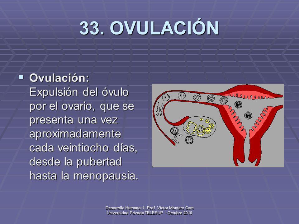 Desarrollo Humano 1, Prof. Víctor Montero Cam Universidad Privada TELESUP - Octubre 2010 32. OVARIOS Ovarios (del latín Ovum = huevo) Glándulas femeni