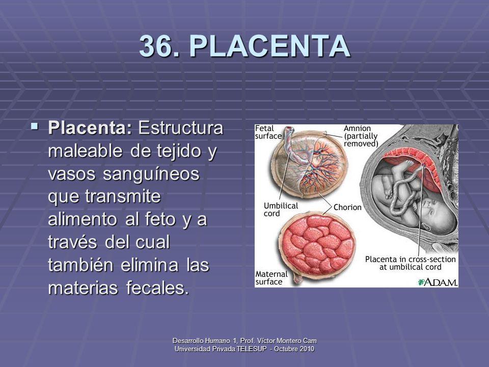 Desarrollo Humano 1, Prof. Víctor Montero Cam Universidad Privada TELESUP - Octubre 2010 35. PARTO Parto: Proceso de tres etapas en el que el feto sal