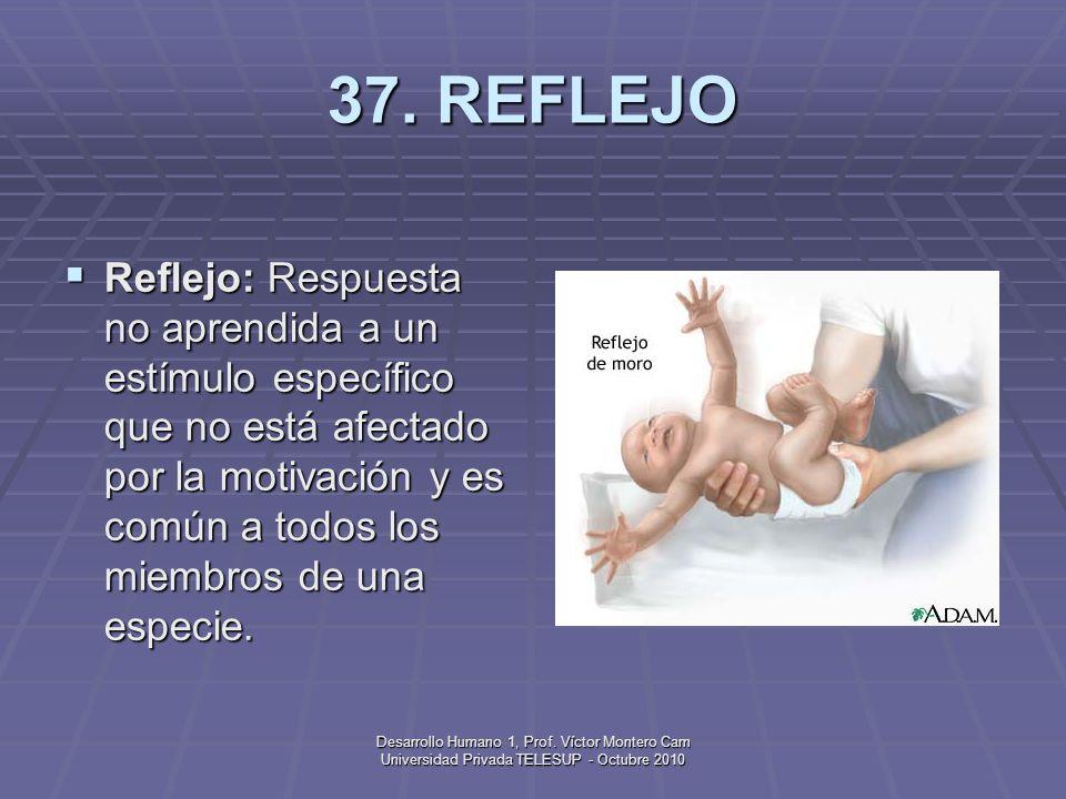 Desarrollo Humano 1, Prof. Víctor Montero Cam Universidad Privada TELESUP - Octubre 2010 36. PLACENTA Placenta: Estructura maleable de tejido y vasos