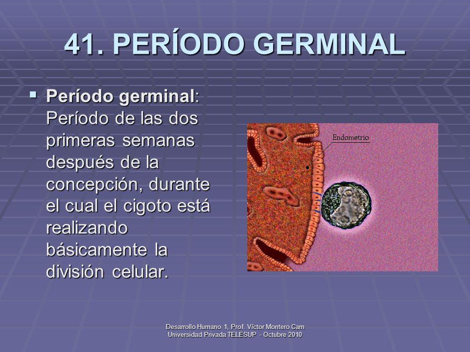 Desarrollo Humano 1, Prof. Víctor Montero Cam Universidad Privada TELESUP - Octubre 2010 40. PERÍODO FETAL Período fetal: Período desde aproximadament