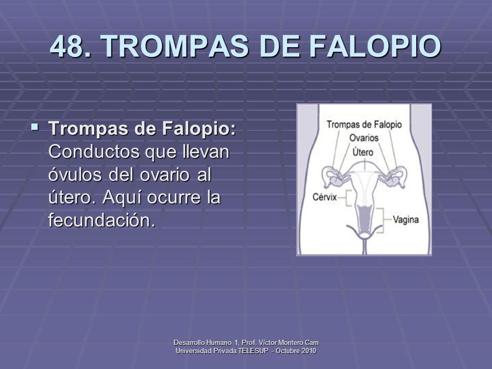 Desarrollo Humano 1, Prof. Víctor Montero Cam Universidad Privada TELESUP - Octubre 2010 47. SURFACTANTE Surfactante: Líquido que recubre las bolsas d