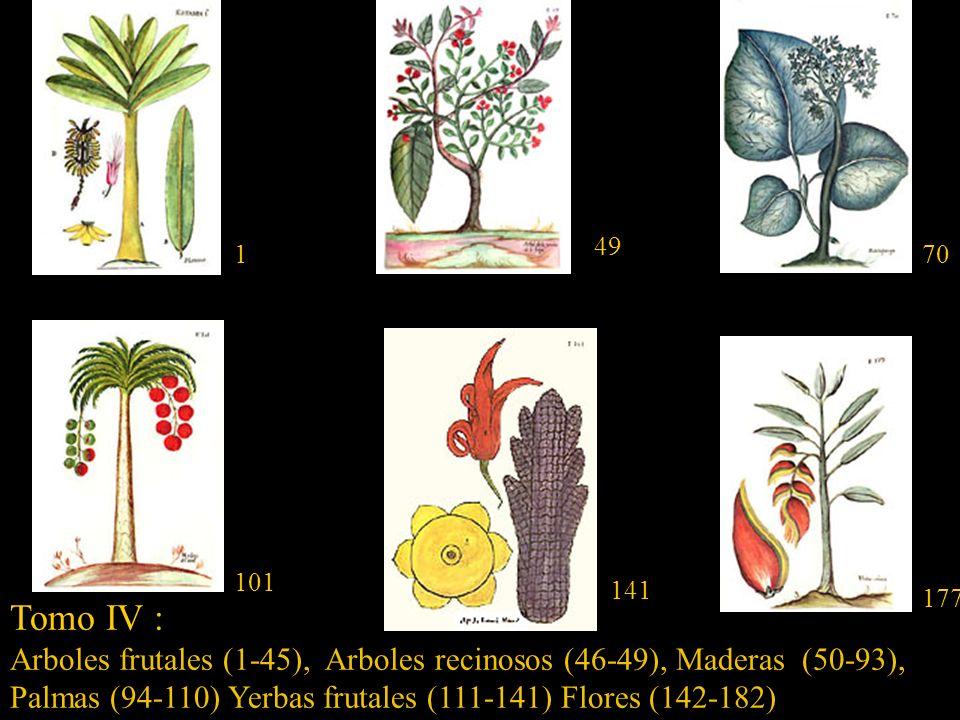 Tomo III : Arboles,(1-53) Frúctices (54-80) Sufrutices (81-152) Bejucos (153-169) 1 55 168 146 64 67