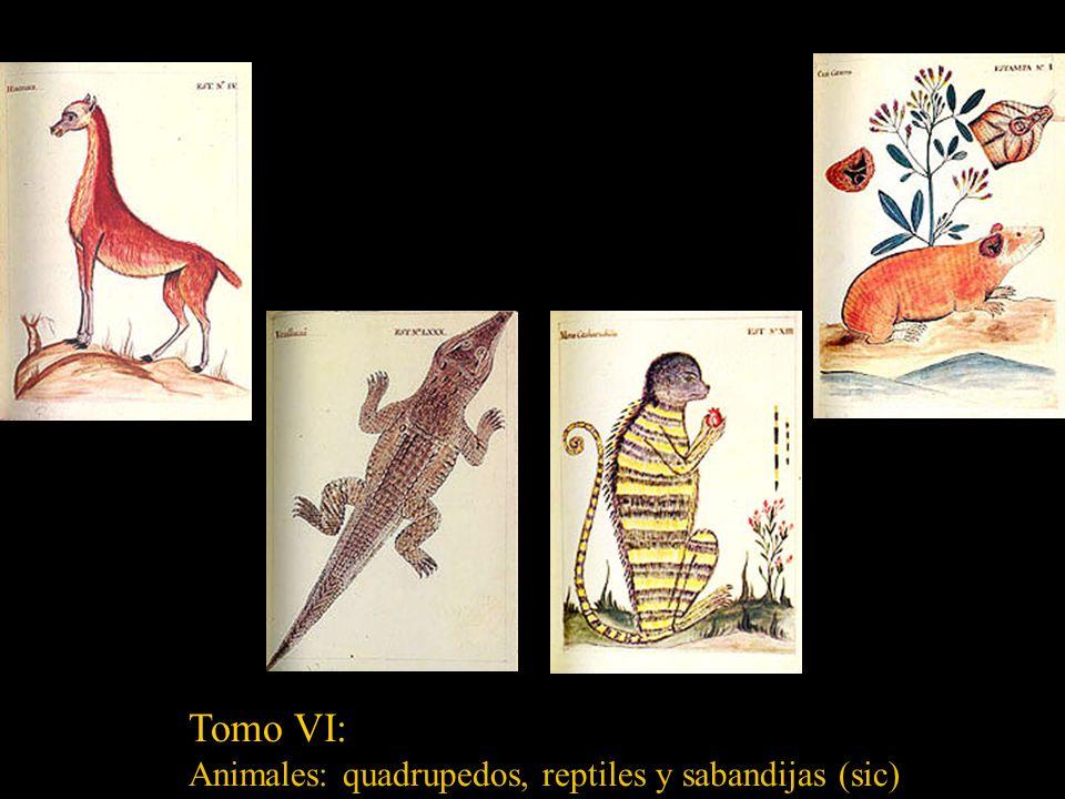 Tomo V: Arboles frutales (1-45), Arboles recinosos (46-49), Maderas (50-93), Palmas (94-110) Yerbas frutales (111-141) Flores (142-182) Adormidera Man