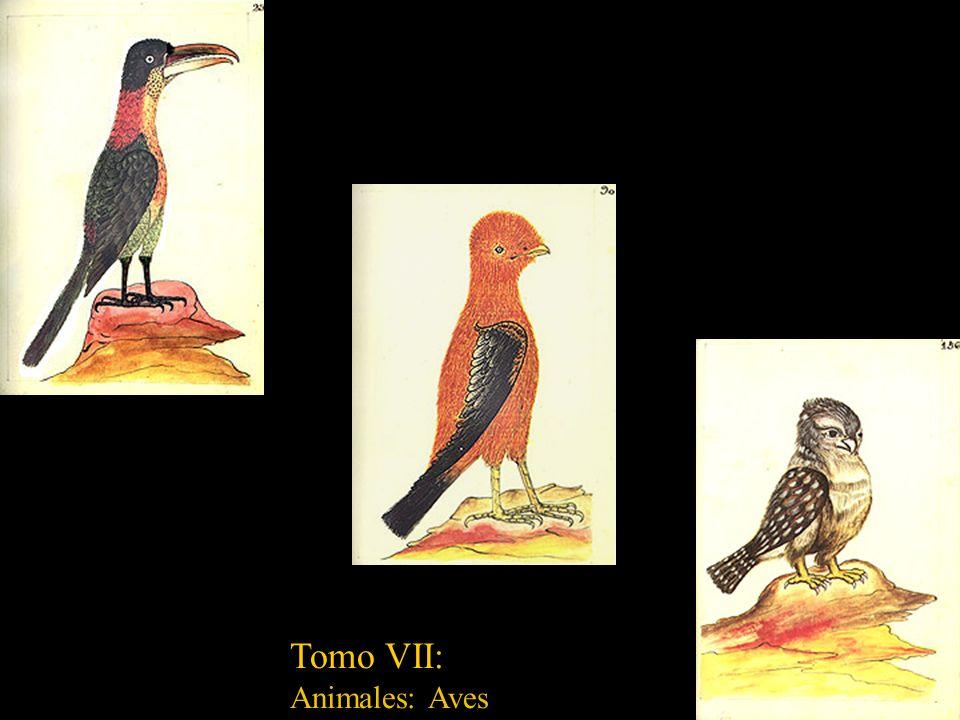Tomo VI: Animales: quadrupedos, reptiles y sabandijas (sic)