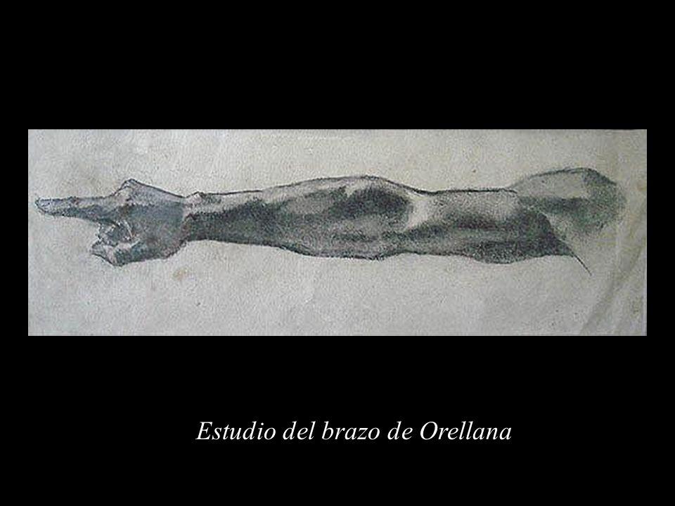 Estudio del brazo de Orellana