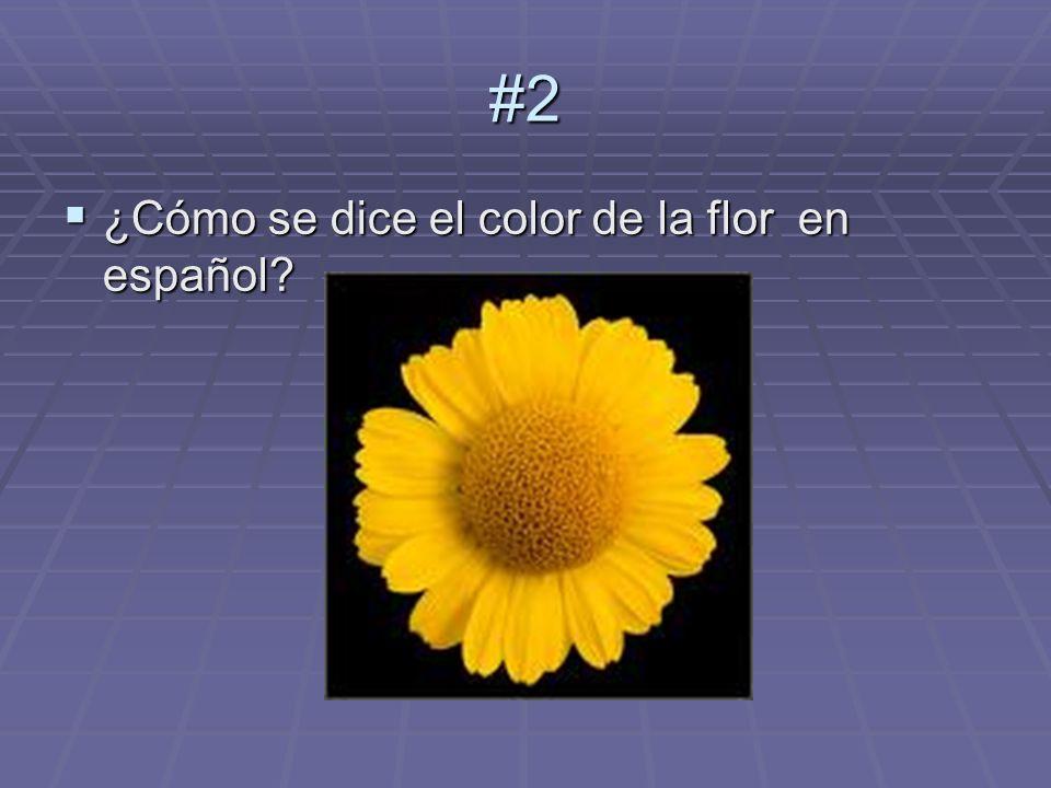 #2 Respuesta: Amarillo #3 ¿Cómo se dice lo que lleva el muchacho en español.