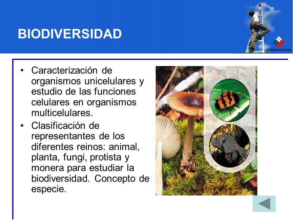 BIODIVERSIDAD Caracterización de organismos unicelulares y estudio de las funciones celulares en organismos multicelulares. Clasificación de represent