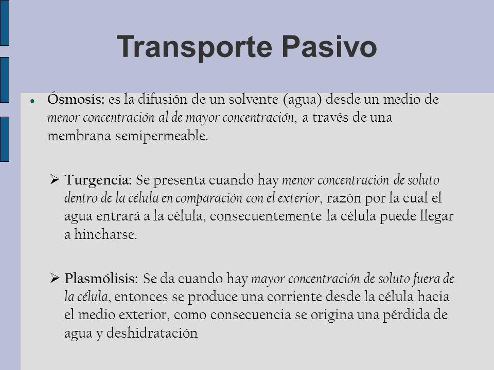 Transporte Pasivo Ósmosis: es la difusión de un solvente (agua) desde un medio de menor concentración al de mayor concentración, a través de una membrana semipermeable.