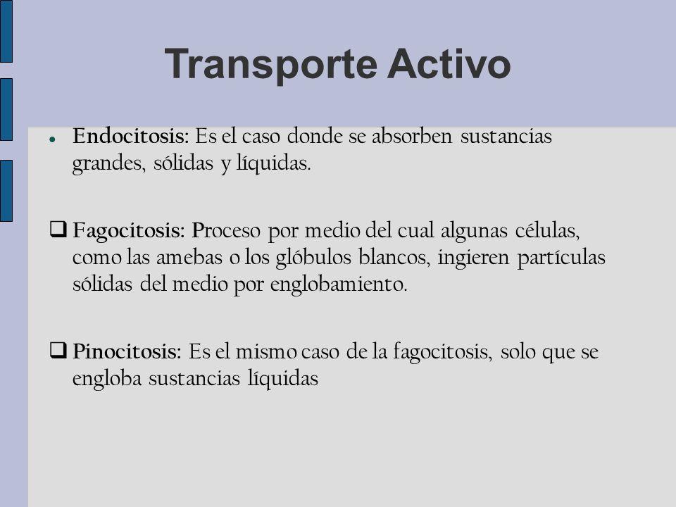 Transporte Activo Endocitosis: Es el caso donde se absorben sustancias grandes, sólidas y líquidas.