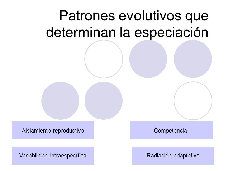 Variabilidad intraespecífica Se produce dentro de la misma especie Puede ser causada por mutación o por combinación de genes mediante la reproducción sexual.