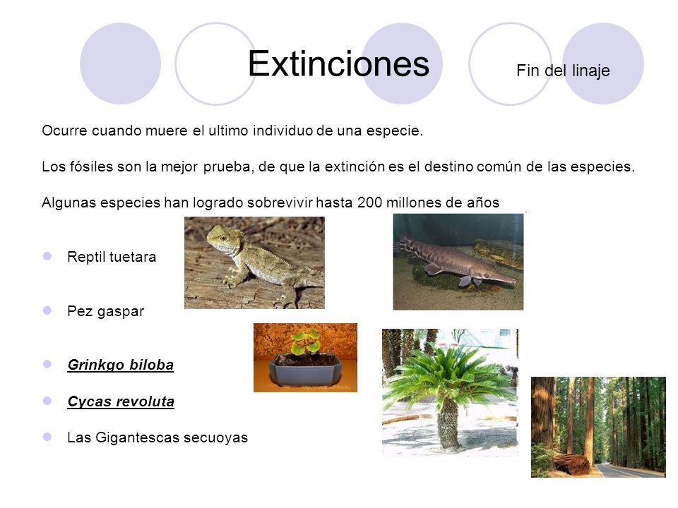 Ley de la duración y la variedad Dinosaurios 1.Caída de meteorito: procesos fotosintéticos, bloqueados por una extensa nube de polvo provocada por la caída de un meteorito.