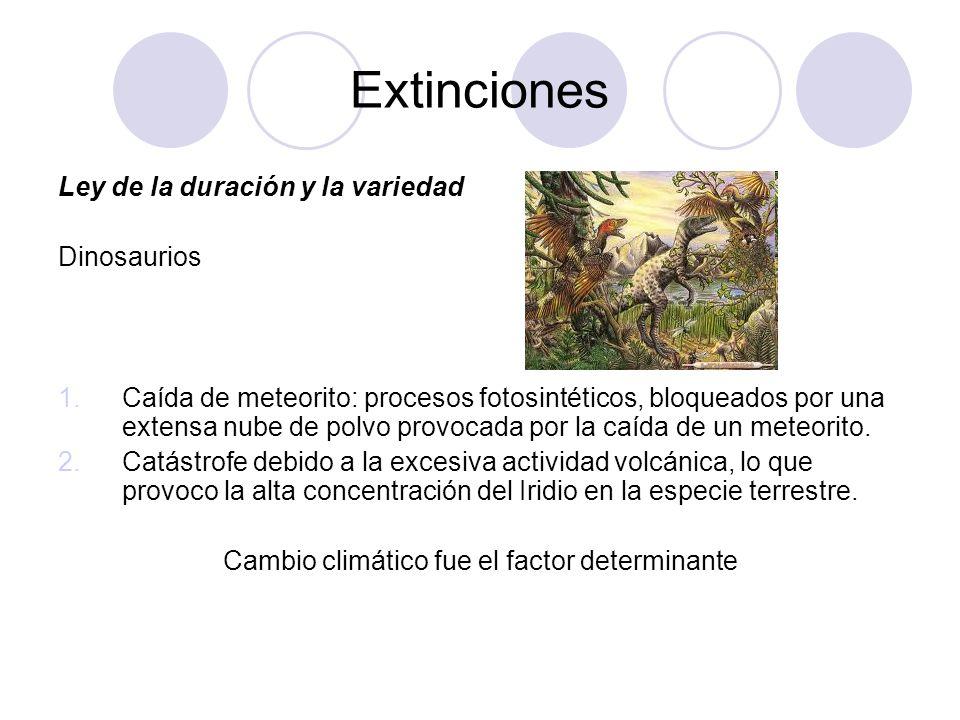 Teorías del origen de las especies Uso y desuso Aparecian organos nuevos como respuesta a las condiciones del ambiente y el tamaño es proporcional al uso que se le dé.