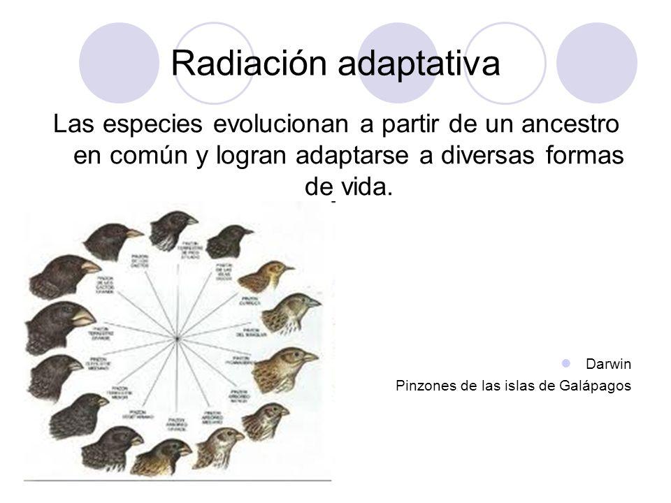 Evidencia del proceso evolutivo Pruebas anatómicas Pruebas embriológicas Pruebas paleontológicas Pruebas bioquímicas Extinciones