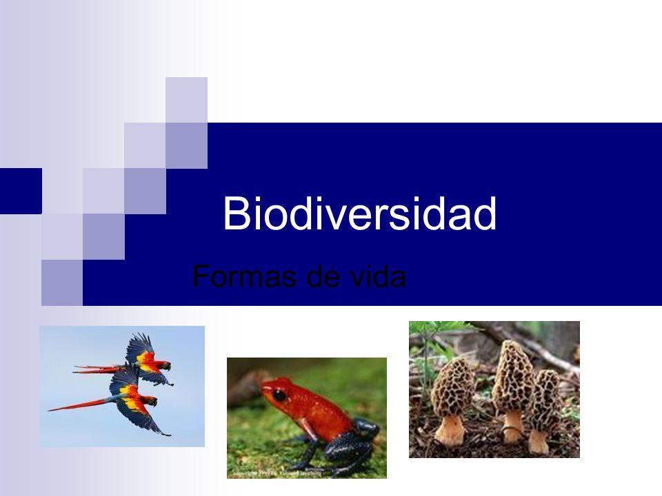 Biodiversidad Formas de vida