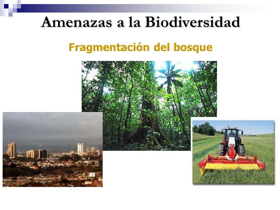 Amenazas a la Biodiversidad Fragmentación del bosque