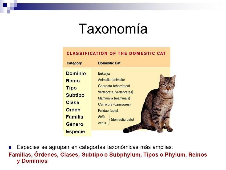 Taxonomía Especies se agrupan en categorías taxonómicas más amplias: Familias, Órdenes, Clases, Subtipo o Subphylum, Tipos o Phylum, Reinos y Dominios Dominio Reino Tipo Subtipo Clase Orden Familia Género Especie