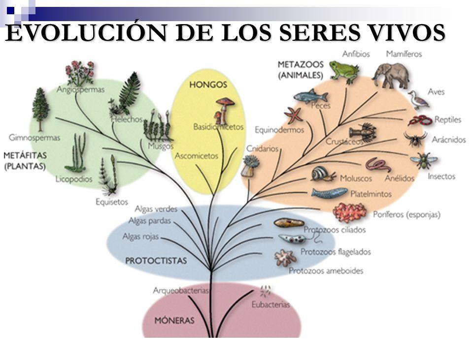 EVOLUCIÓN DE LOS SERES VIVOS