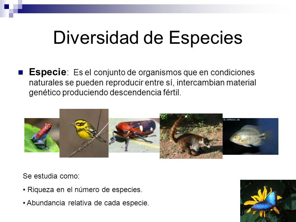 Diversidad de Especies Especie : Es el conjunto de organismos que en condiciones naturales se pueden reproducir entre sí, intercambian material genético produciendo descendencia fértil.