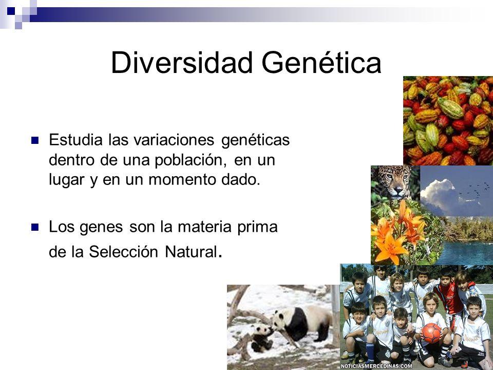 Diversidad Genética Estudia las variaciones genéticas dentro de una población, en un lugar y en un momento dado.