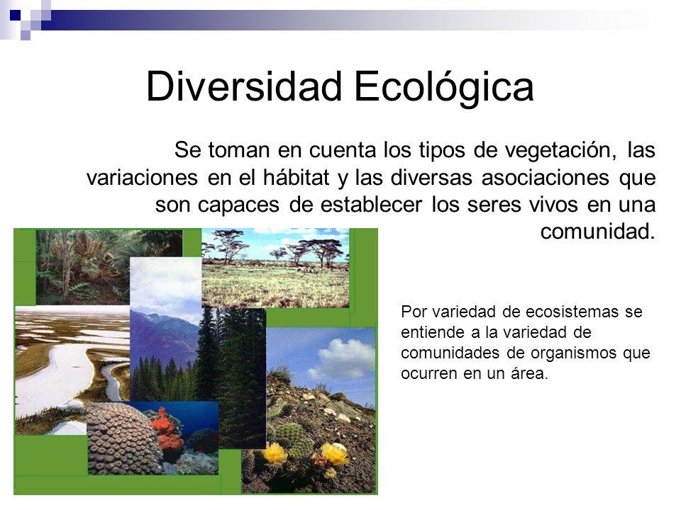 Diversidad Ecológica Se toman en cuenta los tipos de vegetación, las variaciones en el hábitat y las diversas asociaciones que son capaces de establecer los seres vivos en una comunidad.