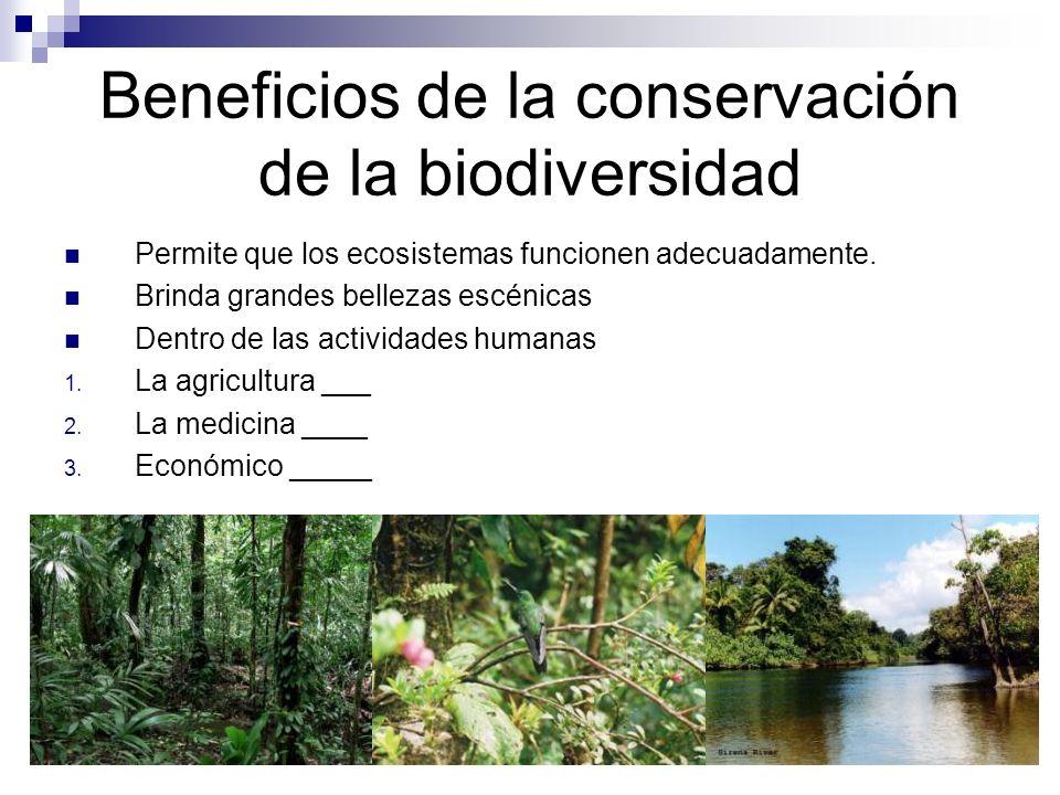 Beneficios de la conservación de la biodiversidad Permite que los ecosistemas funcionen adecuadamente.
