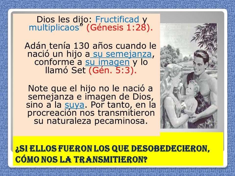 ¿Si ellos fueron los que desobedecieron, cómo nos la transmitieron? Dios les dijo: Fructificad y multiplicaos (Génesis 1:28). Adán tenía 130 años cuan