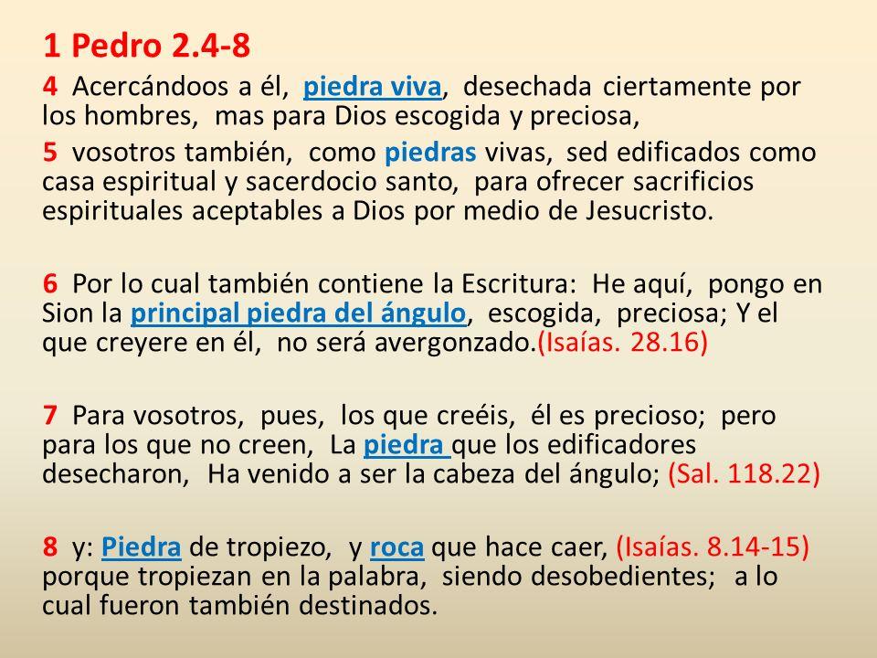 1 Pedro 2.4-8 4 Acercándoos a él, piedra viva, desechada ciertamente por los hombres, mas para Dios escogida y preciosa, 5 vosotros también, como pied