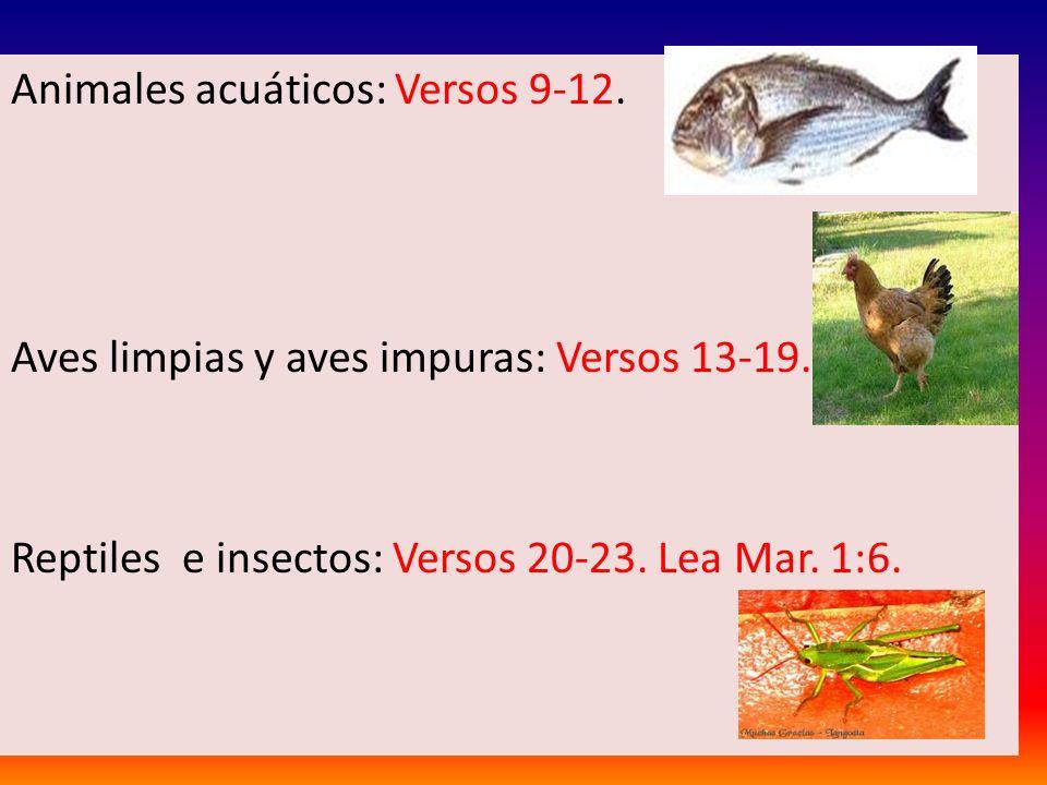 Animales acuáticos: Versos 9-12.Aves limpias y aves impuras: Versos 13-19.