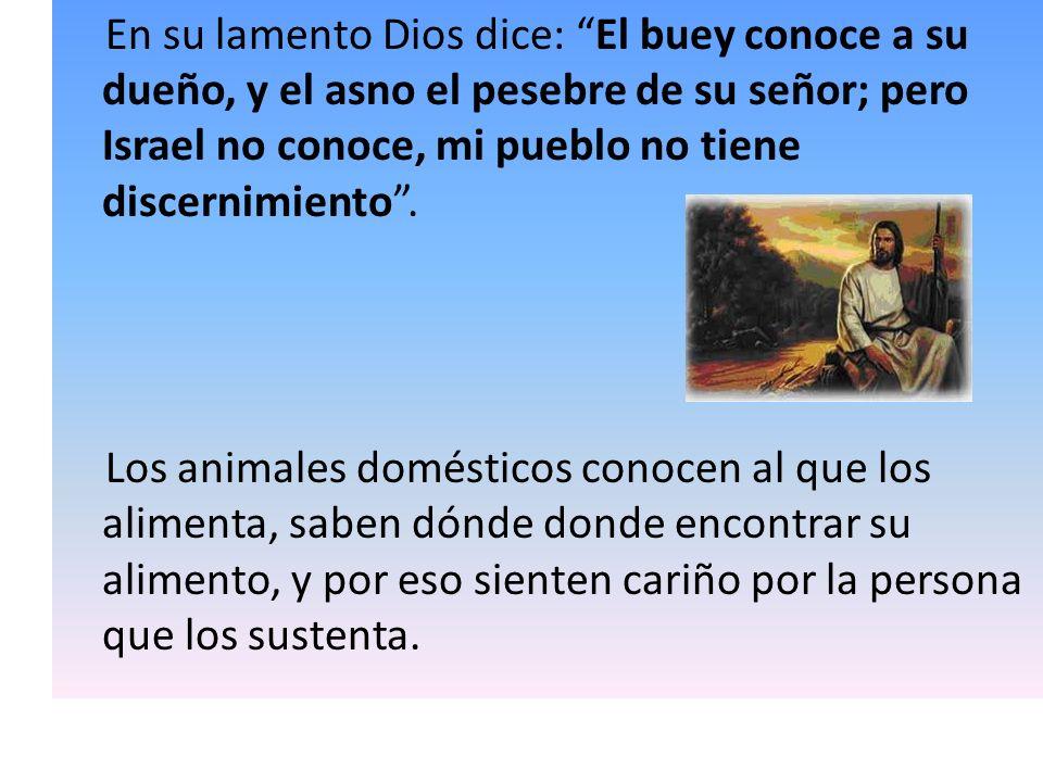 En su lamento Dios dice: El buey conoce a su dueño, y el asno el pesebre de su señor; pero Israel no conoce, mi pueblo no tiene discernimiento. Los an