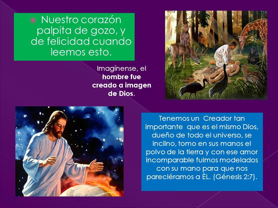 Dios el Eterno había hecho nacer de la tierra toda clase de árboles hermosos y buenos para comer (Génesis 2:9).