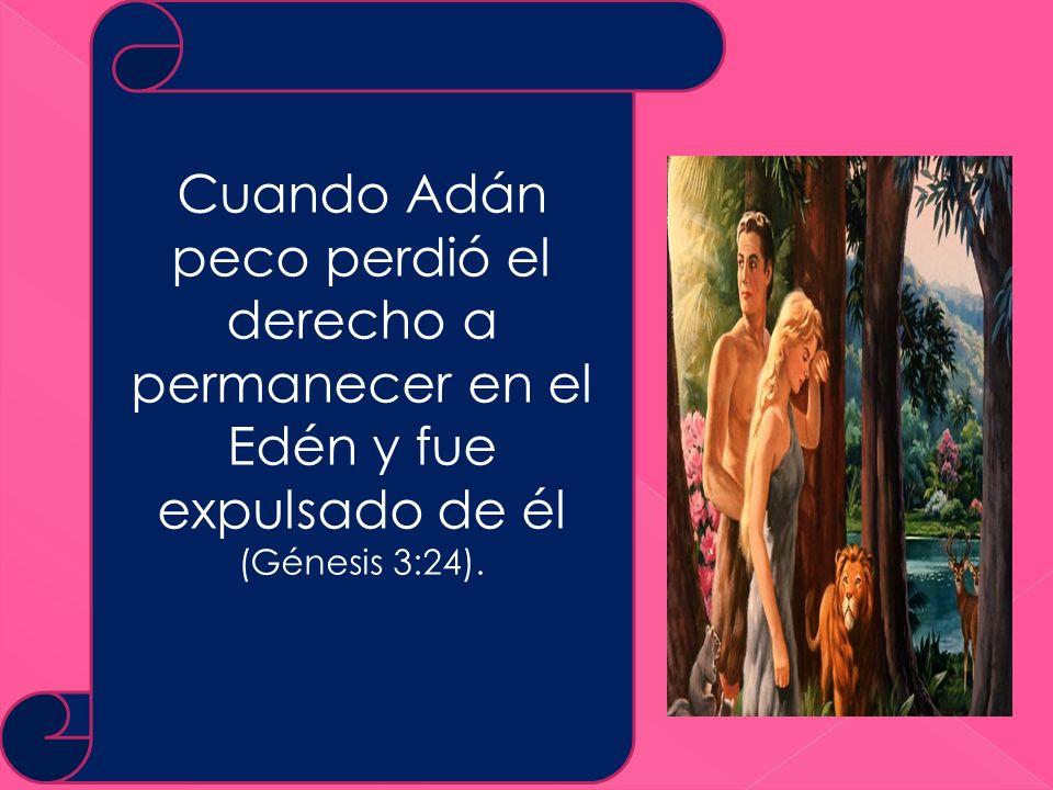 Cuando Adán peco perdió el derecho a permanecer en el Edén y fue expulsado de él (Génesis 3:24).