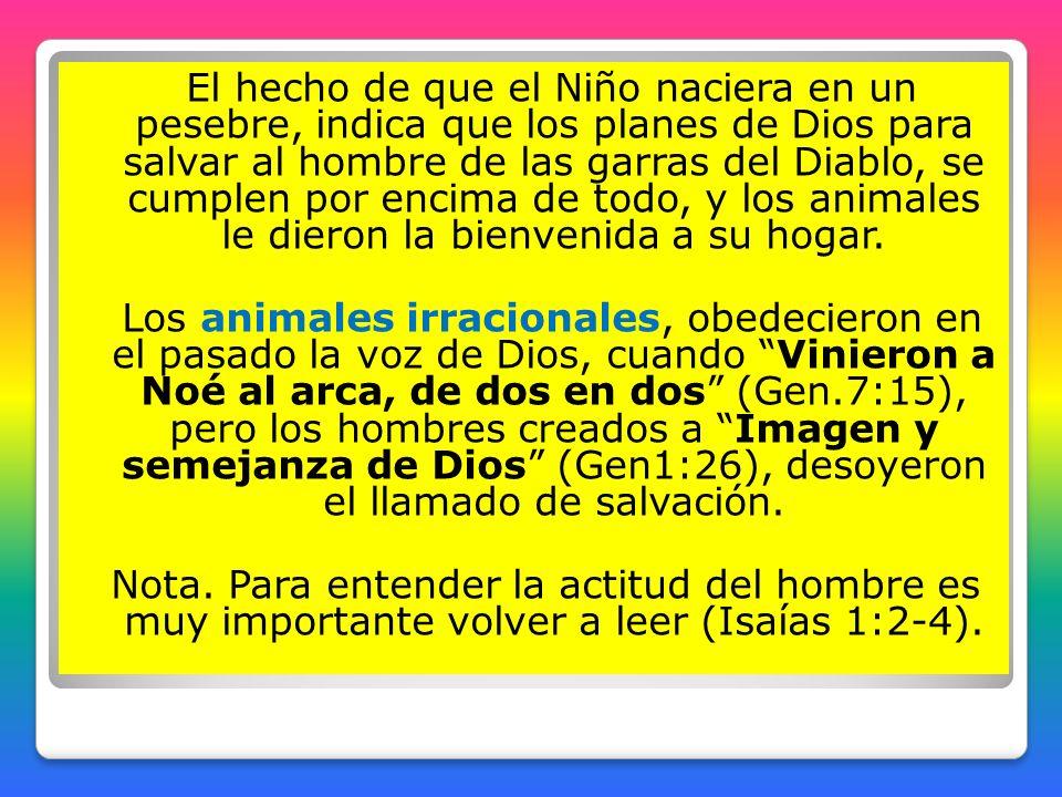 El hecho de que el Niño naciera en un pesebre, indica que los planes de Dios para salvar al hombre de las garras del Diablo, se cumplen por encima de