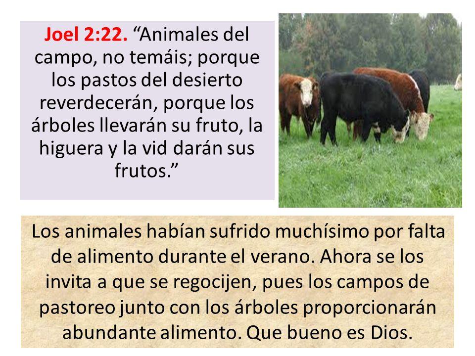 Joel 2:22. Animales del campo, no temáis; porque los pastos del desierto reverdecerán, porque los árboles llevarán su fruto, la higuera y la vid darán
