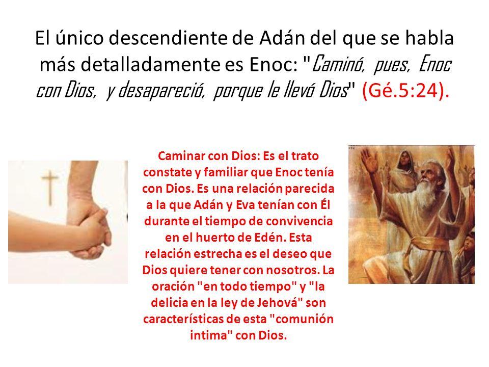 El único descendiente de Adán del que se habla más detalladamente es Enoc: