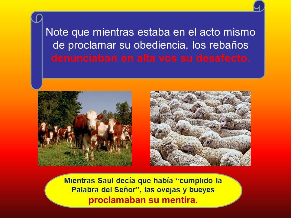 Note que mientras estaba en el acto mismo de proclamar su obediencia, los rebaños denunciaban en alta vos su desafecto. Mientras Saul decía que había