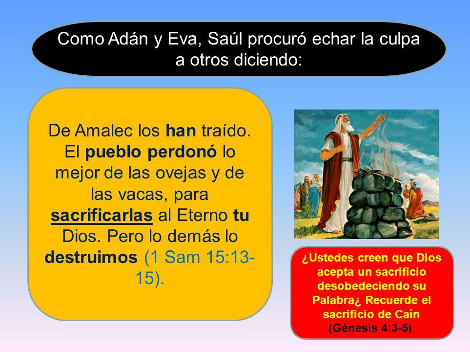 Como Adán y Eva, Saúl procuró echar la culpa a otros diciendo: De Amalec los han traído. El pueblo perdonó lo mejor de las ovejas y de las vacas, para