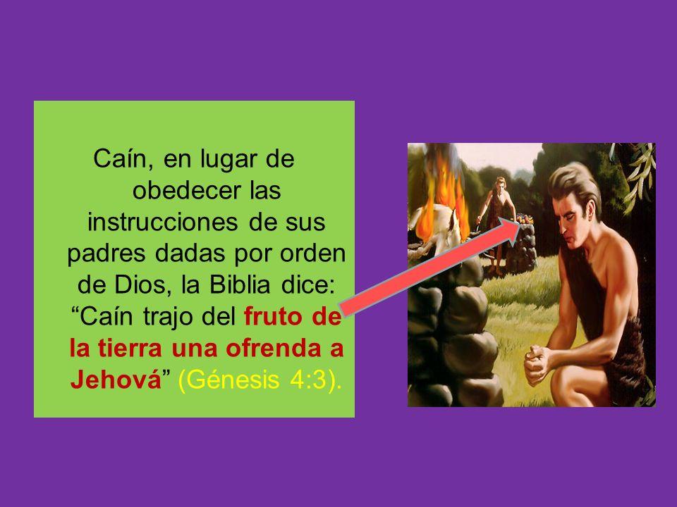 Caín, en lugar de obedecer las instrucciones de sus padres dadas por orden de Dios, la Biblia dice: Caín trajo del fruto de la tierra una ofrenda a Je