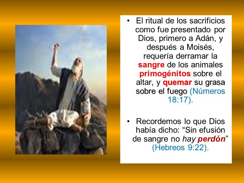 quemar su grasa sobre el fuegoEl ritual de los sacrificios como fue presentado por Dios, primero a Adán, y después a Moisés, requería derramar la sang