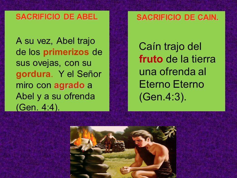 SACRIFICIO DE ABEL agrado A su vez, Abel trajo de los primerizos de sus ovejas, con su gordura. Y el Señor miro con agrado a Abel y a su ofrenda (Gen.