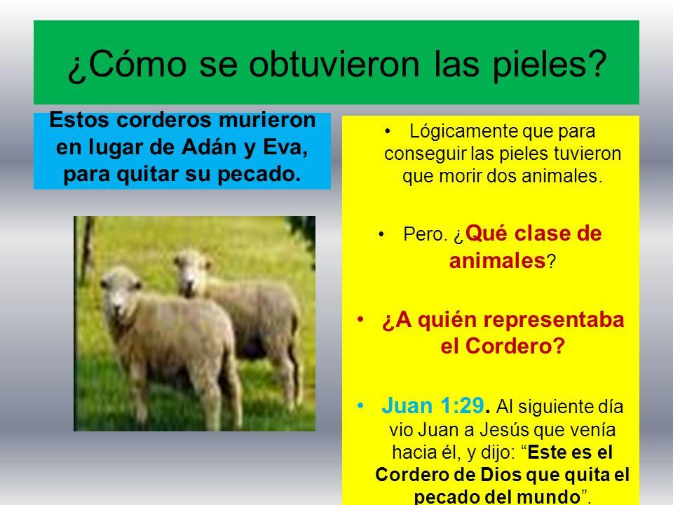¿Cómo se obtuvieron las pieles? Estos corderos murieron en lugar de Adán y Eva, para quitar su pecado. Lógicamente que para conseguir las pieles tuvie