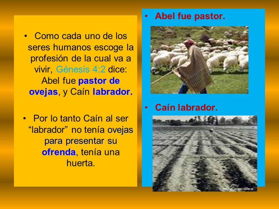 pastor de ovejaslabrador.Como cada uno de los seres humanos escoge la profesión de la cual va a vivir, Génesis 4:2 dice: Abel fue pastor de ovejas, y