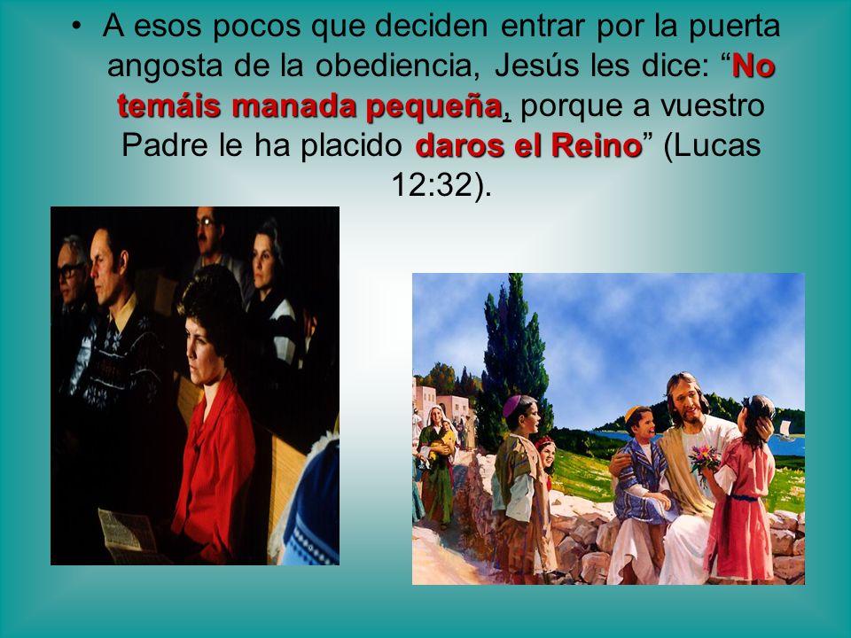 No temáis manada pequeña daros el ReinoA esos pocos que deciden entrar por la puerta angosta de la obediencia, Jesús les dice: No temáis manada pequeñ