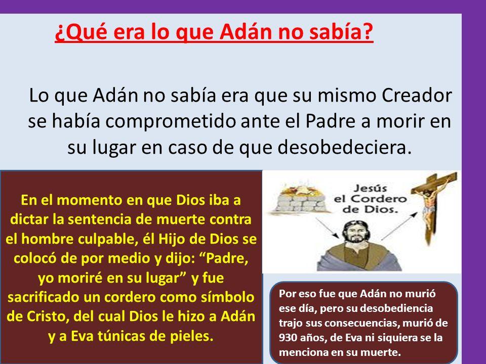 ¿Qué era lo que Adán no sabía? Lo que Adán no sabía era que su mismo Creador se había comprometido ante el Padre a morir en su lugar en caso de que de