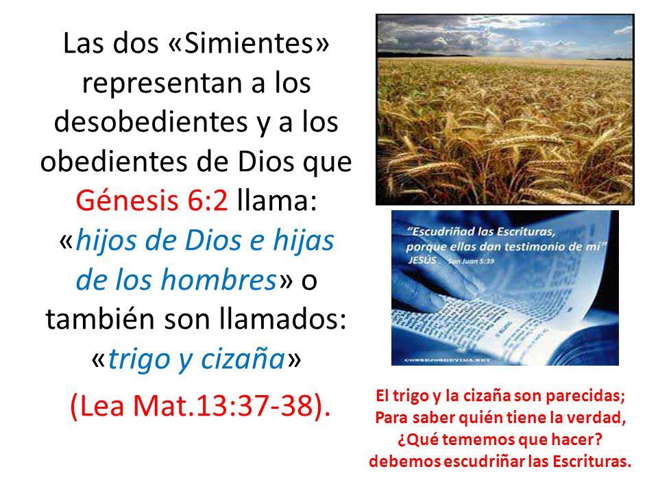 Las dos «Simientes» representan a los desobedientes y a los obedientes de Dios que Génesis 6:2 llama: «hijos de Dios e hijas de los hombres» o también