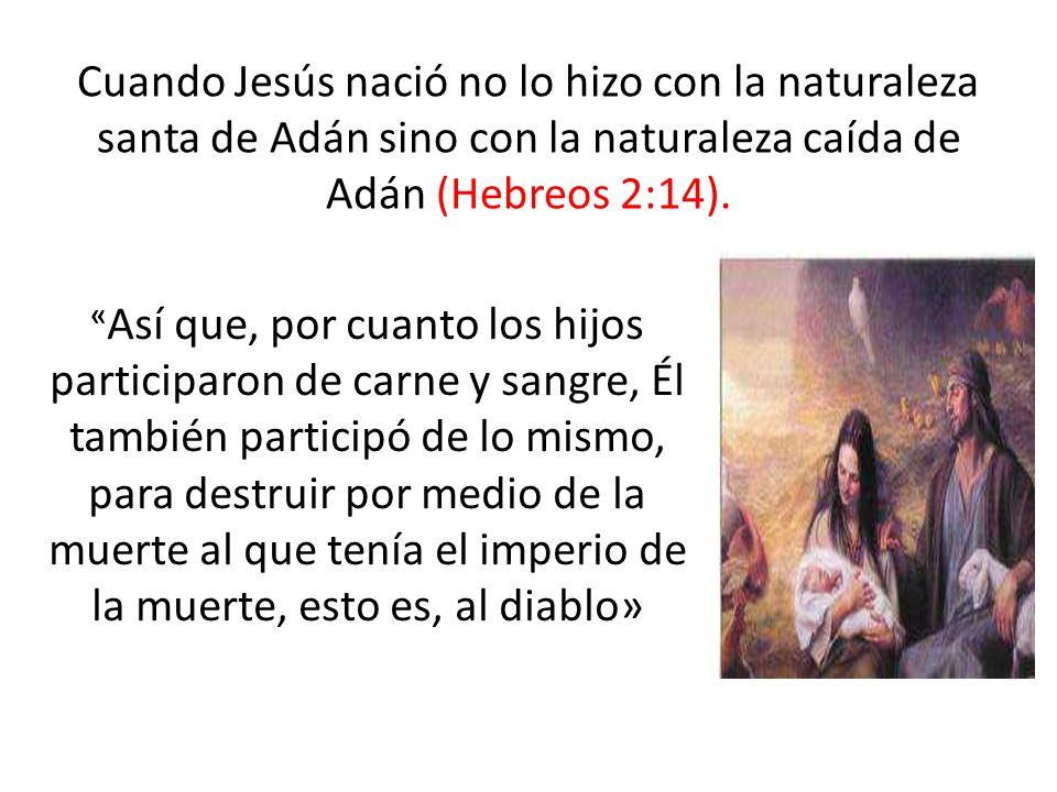 Cuando Jesús nació no lo hizo con la naturaleza santa de Adán sino con la naturaleza caída de Adán (Hebreos 2:14). « Así que, por cuanto los hijos par