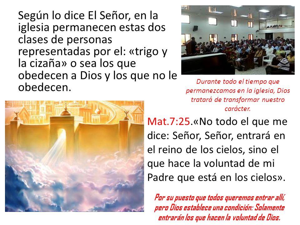 Según lo dice El Señor, en la iglesia permanecen estas dos clases de personas representadas por el: «trigo y la cizaña» o sea los que obedecen a Dios y los que no le obedecen.