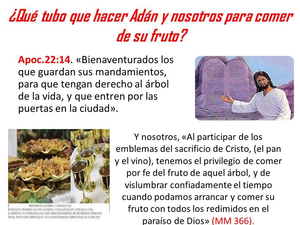 ¿Qué tubo que hacer Adán y nosotros para comer de su fruto? Apoc.22:14. «Bienaventurados los que guardan sus mandamientos, para que tengan derecho al