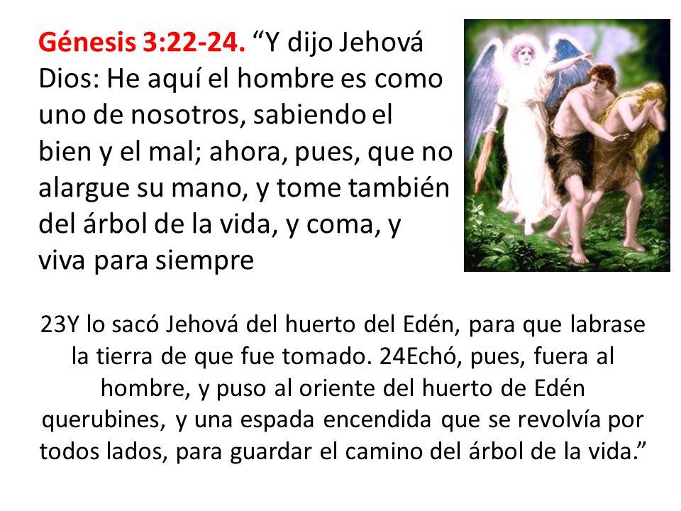 Génesis 3:22-24. Y dijo Jehová Dios: He aquí el hombre es como uno de nosotros, sabiendo el bien y el mal; ahora, pues, que no alargue su mano, y tome