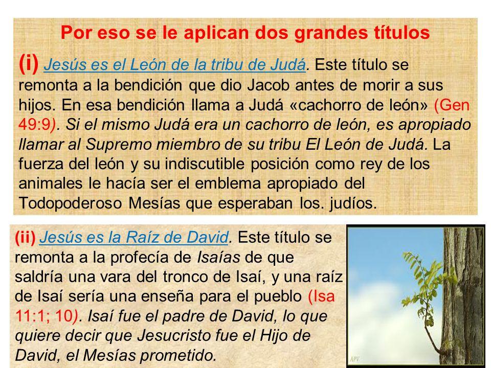 Por eso se le aplican dos grandes títulos (i) Jesús es el León de la tribu de Judá. Este título se remonta a la bendición que dio Jacob antes de morir